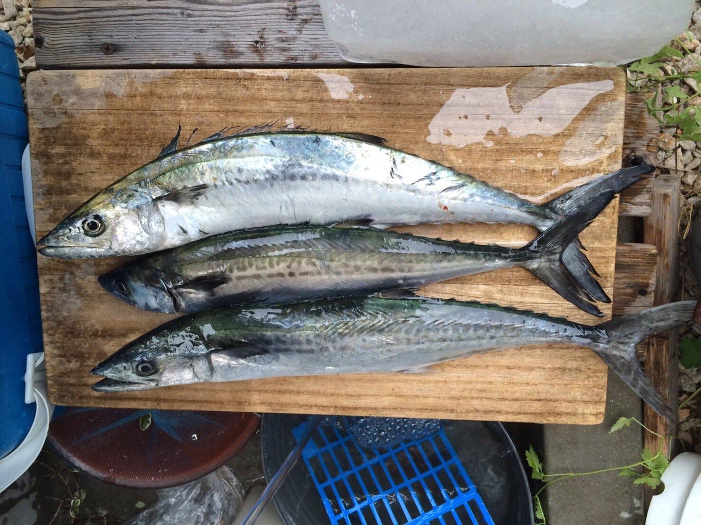 K さんの投稿画像,写っている魚はサワラ