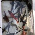 teketekeさんの宮崎県延岡市での釣果写真