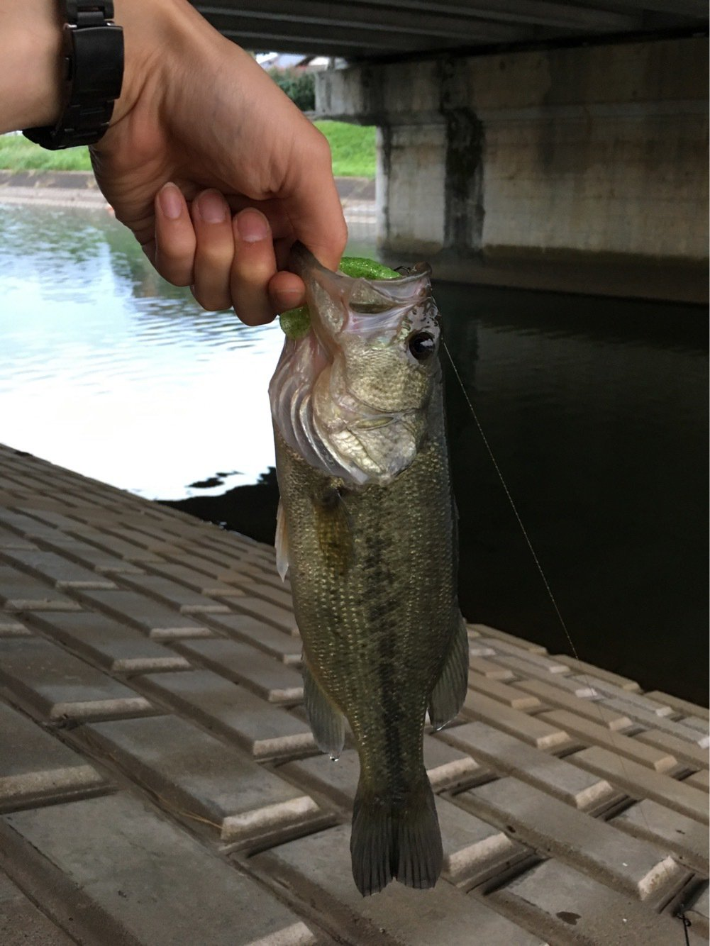 おカズさんさんの投稿画像,写っている魚はブラックバス