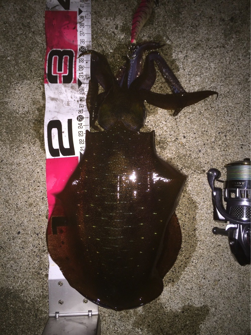 かずさんの投稿画像,写っている魚はアオリイカ