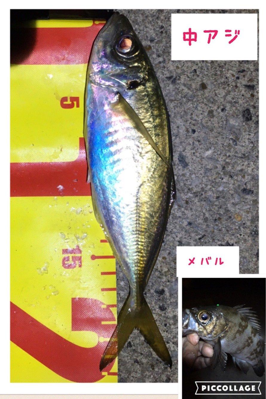 Angler🇯🇵TAKASHIさんの投稿画像,写っている魚はアジ