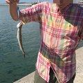 ならざきピロシキさんの山口県宇部市での釣果写真
