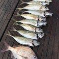 3ka.Bo-zuさんの石川県鳳珠郡での釣果写真