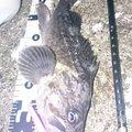 カチュアさんの北海道宗谷郡での釣果写真