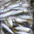 トニさんの兵庫県洲本市での釣果写真