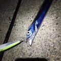 キャッチ&イートさんの新潟県新潟市でのタチウオの釣果写真