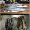 朋希さんの徳島県阿南市でのアオリイカの釣果写真