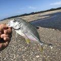 kappatoshiさんの和歌山県西牟婁郡での釣果写真