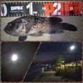 Tomo_Pandaさんの宮城県でのクロソイの釣果写真