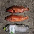 海坊主さんの熊本県熊本市での釣果写真