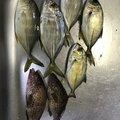 ポテトさんの三重県度会郡での釣果写真