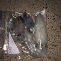 黒ぼーさんの鹿児島県でのアオリイカの釣果写真