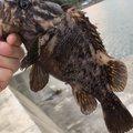 ٩( 'ω' )وさんの岩手県陸前高田市での釣果写真