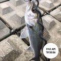てつこさんの宮城県東松島市での釣果写真
