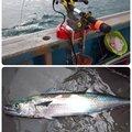 ☆*:真鯛中毒*:☆さんの新潟県長岡市での釣果写真