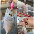 yoshiさんの沖縄県でのロウニンアジの釣果写真