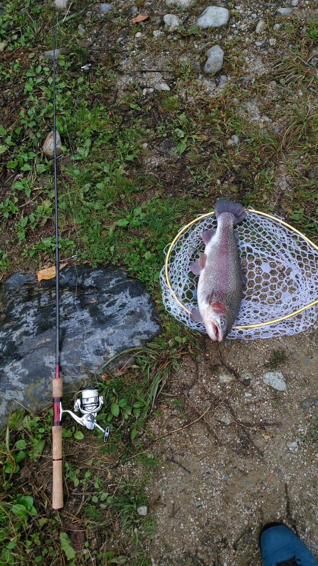 こうすけさんの投稿画像,写っている魚はニジマス