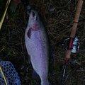 こうすけさんの長野県での釣果写真