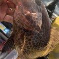 Iさんの鹿児島県垂水市での釣果写真