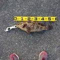 南の黒鯛師さんの鹿児島県志布志市での釣果写真