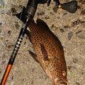 あっ君さんの和歌山県西牟婁郡での釣果写真