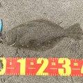 MKTさんの宮城県東松島市での釣果写真