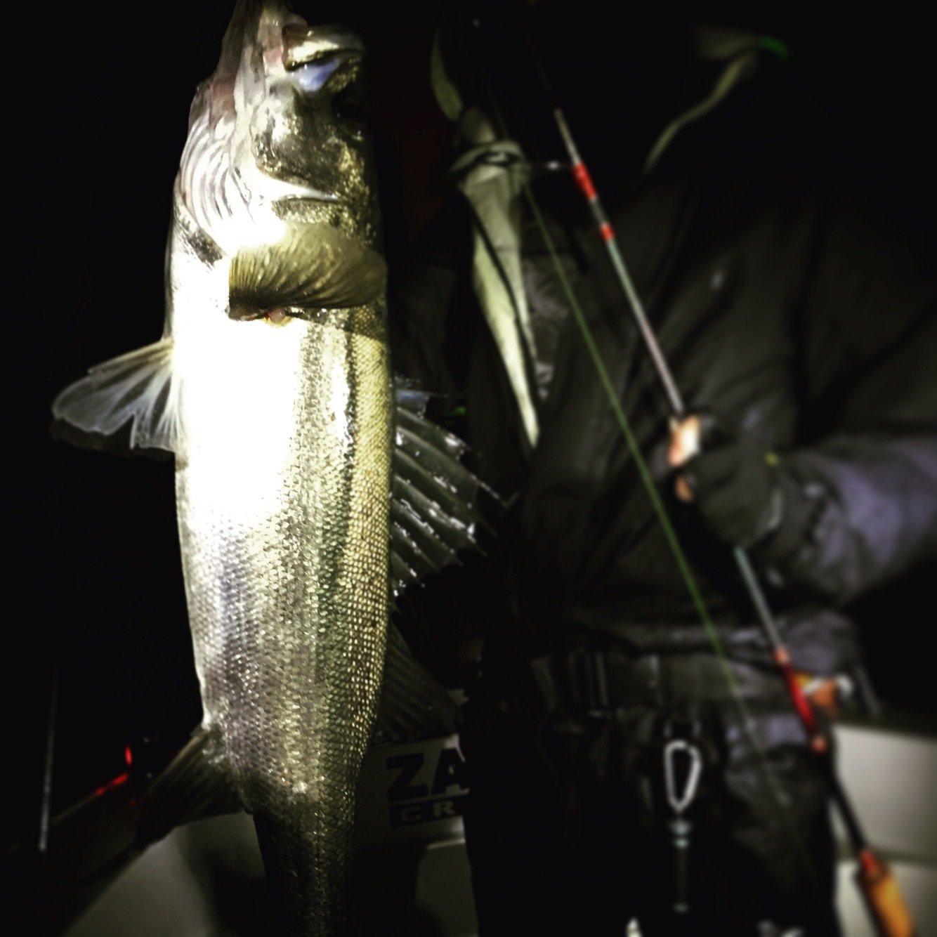 スズキ@愛宕浜さんの投稿画像,写っている魚はスズキ