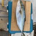 かのなさんの愛知県西尾市での釣果写真