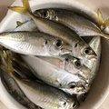 hikaruさんの福岡県糟屋郡での釣果写真
