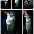 Masaさんの埼玉県北葛飾郡での釣果写真