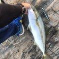 シヴァさんの山口県下関市での釣果写真
