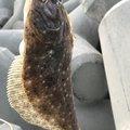 まーさんの岩手県での釣果写真