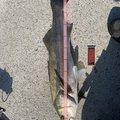 fumiさんの宮城県東松島市での釣果写真