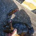 いぬころがしさんの宮崎県児湯郡での釣果写真