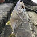 し〜さんの沖縄県でのギンガメアジの釣果写真