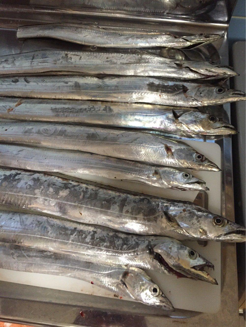 ふるっちさんの投稿画像,写っている魚はタチウオ