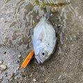 Ku Taさんの沖縄県名護市での釣果写真