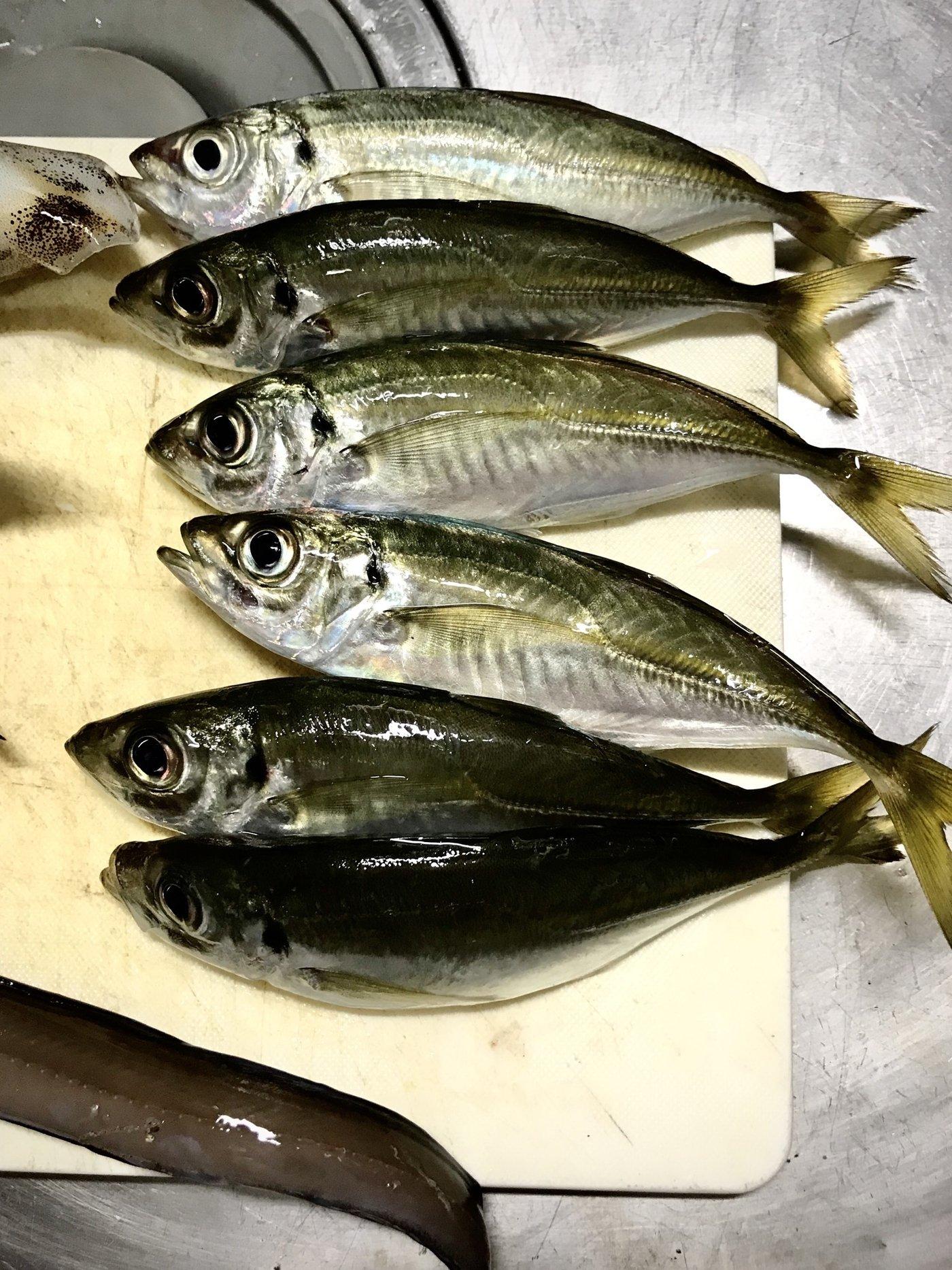 tyuki さんの投稿画像,写っている魚はアジ