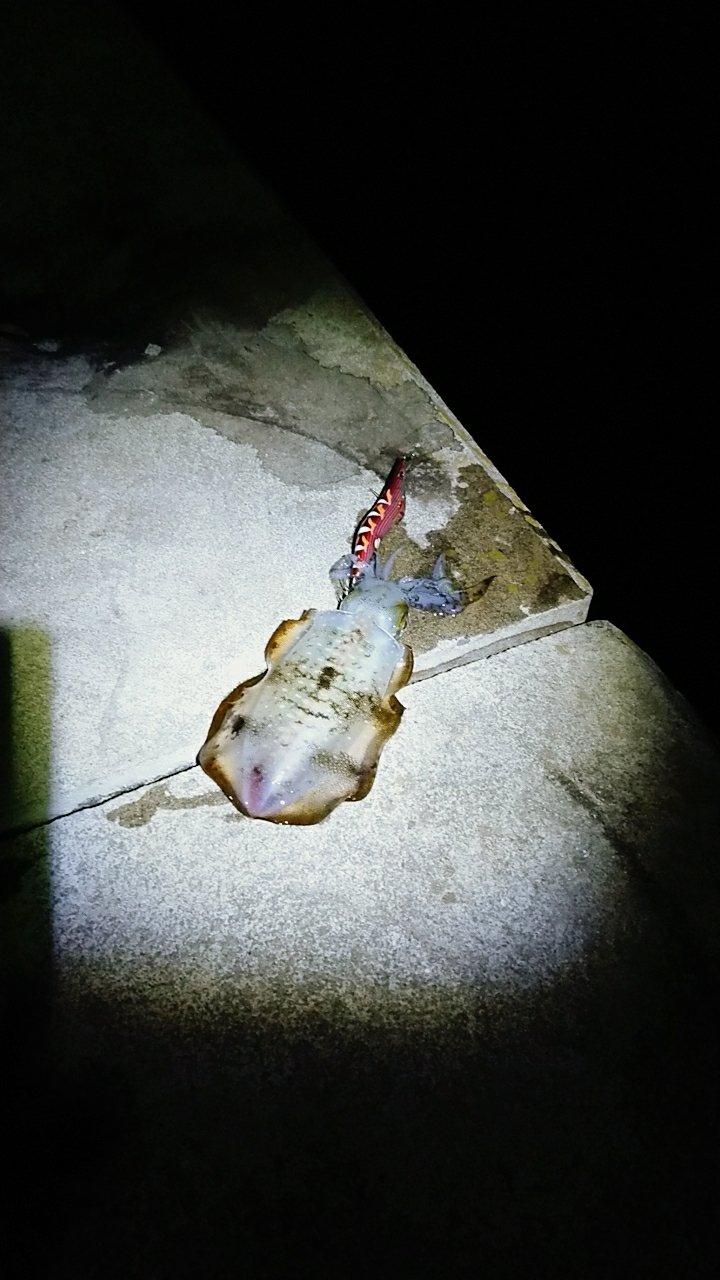 ヒロさんの投稿画像,写っている魚はアオリイカ