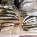 むささびさんの福岡県糟屋郡での釣果写真
