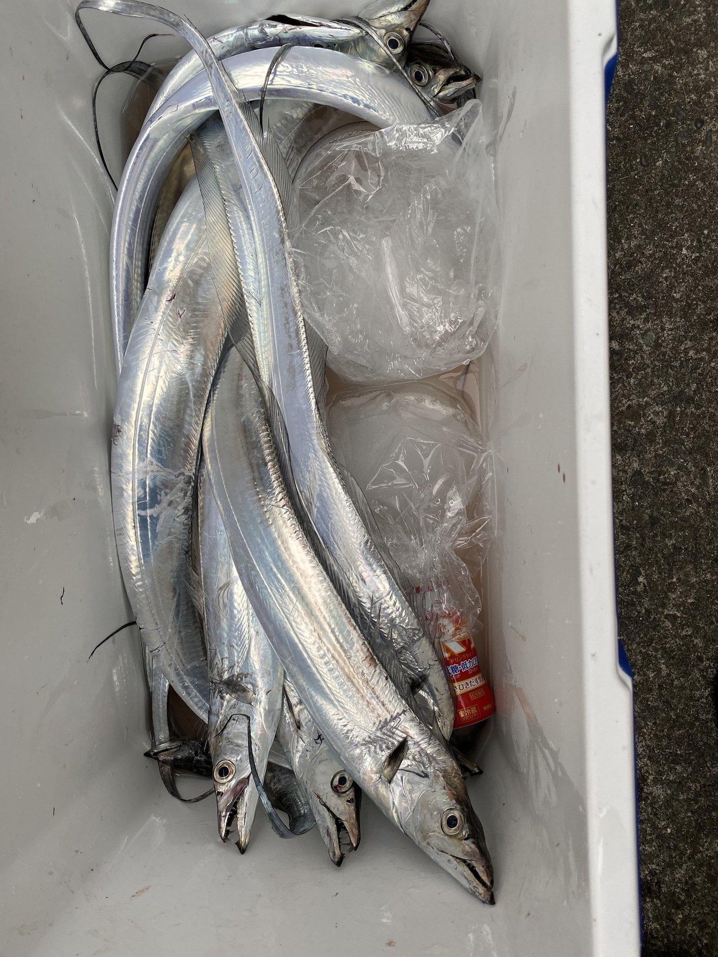 かつてのバスプロさんの投稿画像,写っている魚はタチウオ,,