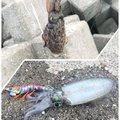 ぞーこさんの徳島県鳴門市での釣果写真