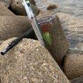 yumeさんの兵庫県でのサヨリの釣果写真