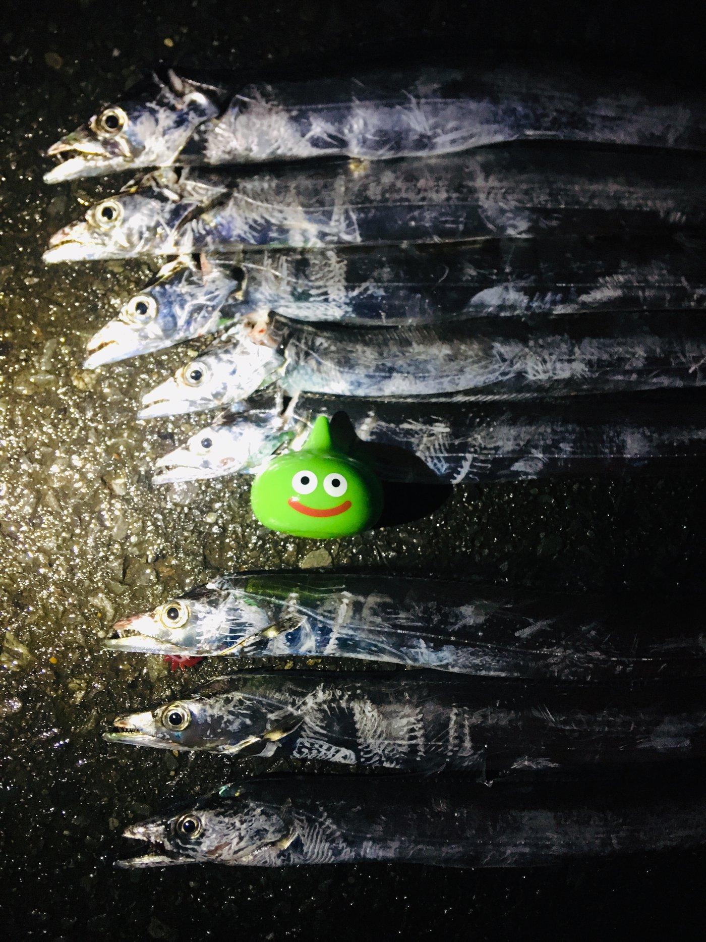 かいさんの投稿画像,写っている魚はタチウオ