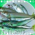 釣りバカ夫婦★さんのシロギスの釣果写真
