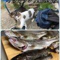 もりやさんの神奈川県でのヤマメの釣果写真