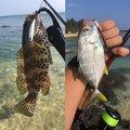 マサマサ🐡さんの沖縄県名護市での釣果写真