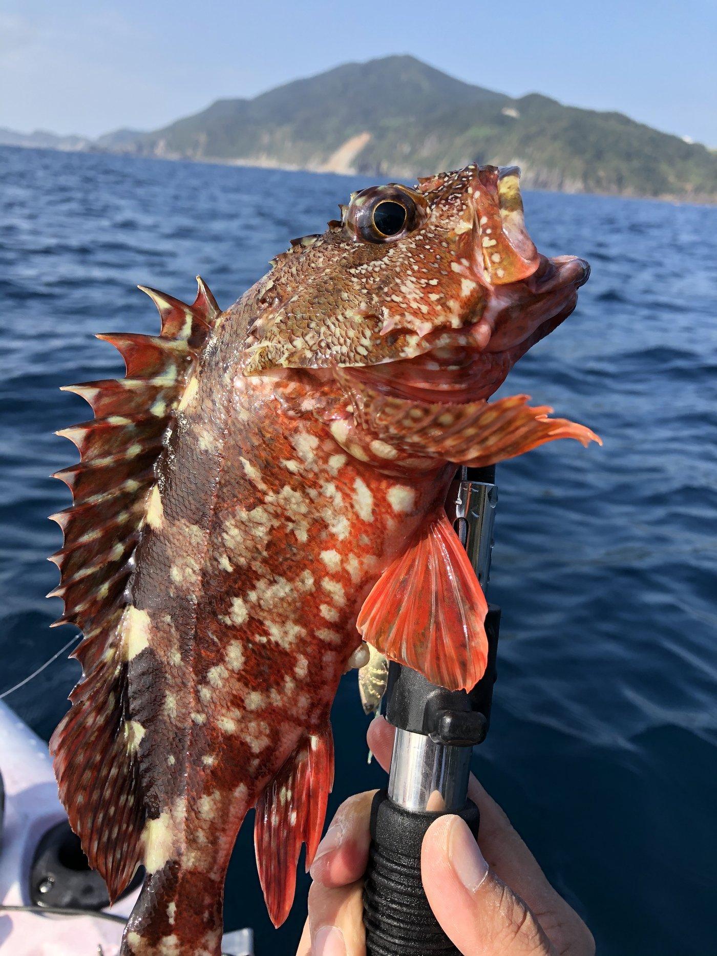 さとしさんの投稿画像,写っている魚はカサゴ
