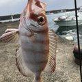 keenさんの鹿児島県肝属郡での釣果写真