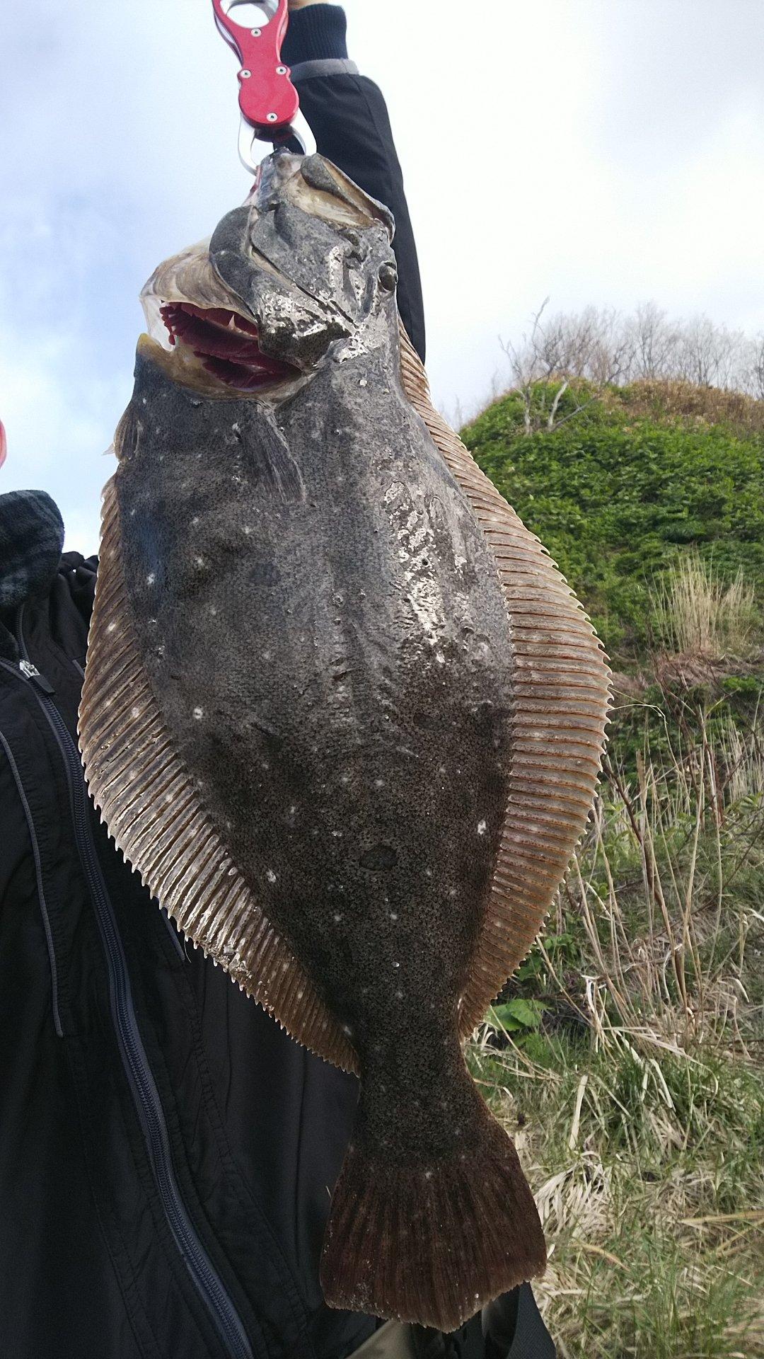 つーりんぐさんの投稿画像,写っている魚は